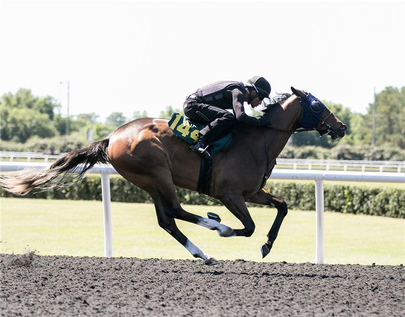 Hip 144 - Hurricane Hannah 2017 (4)
