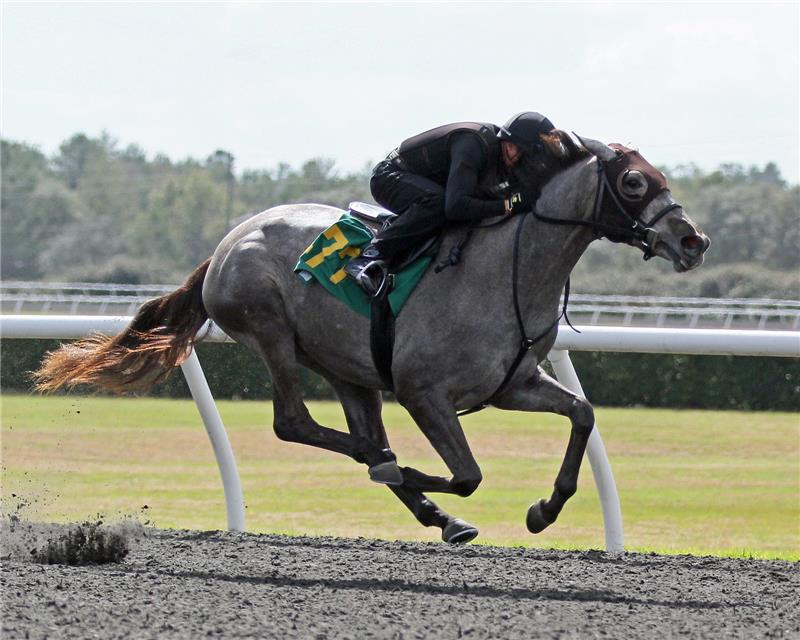 Hip 477 - Commercialize (1)