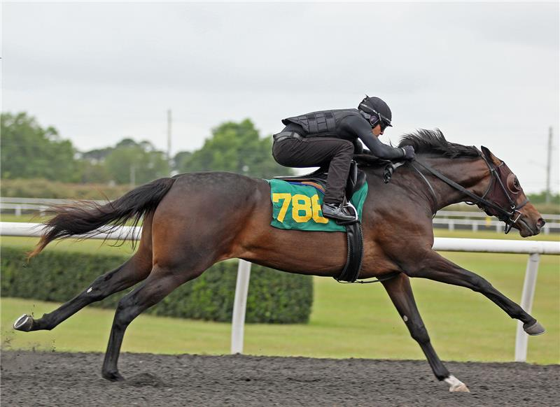 Hip 786 - Exciting Avenue 2014 (2)