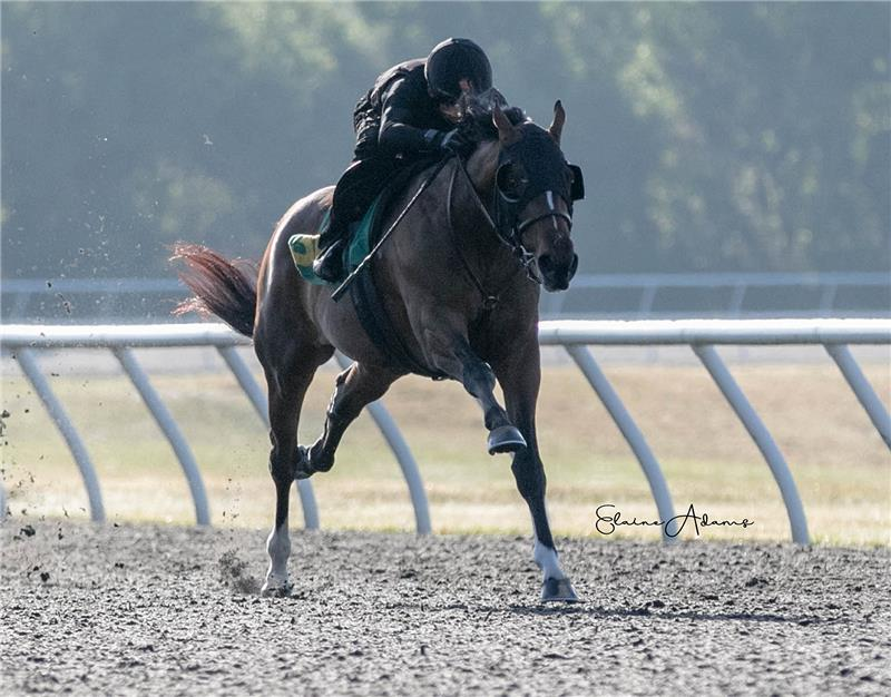 Hip 309 - The Dream 2019 (1)
