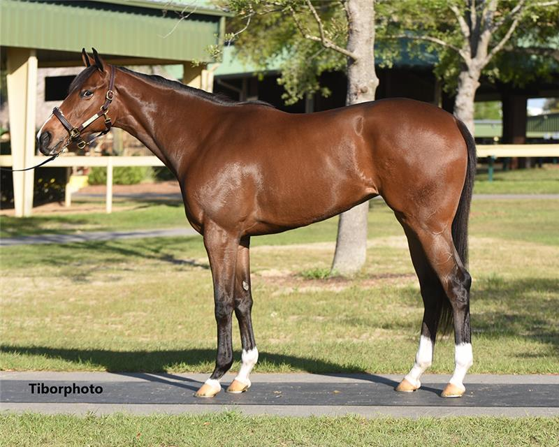 Hip 843 - Ghostzapper (Gal About Town 2019)